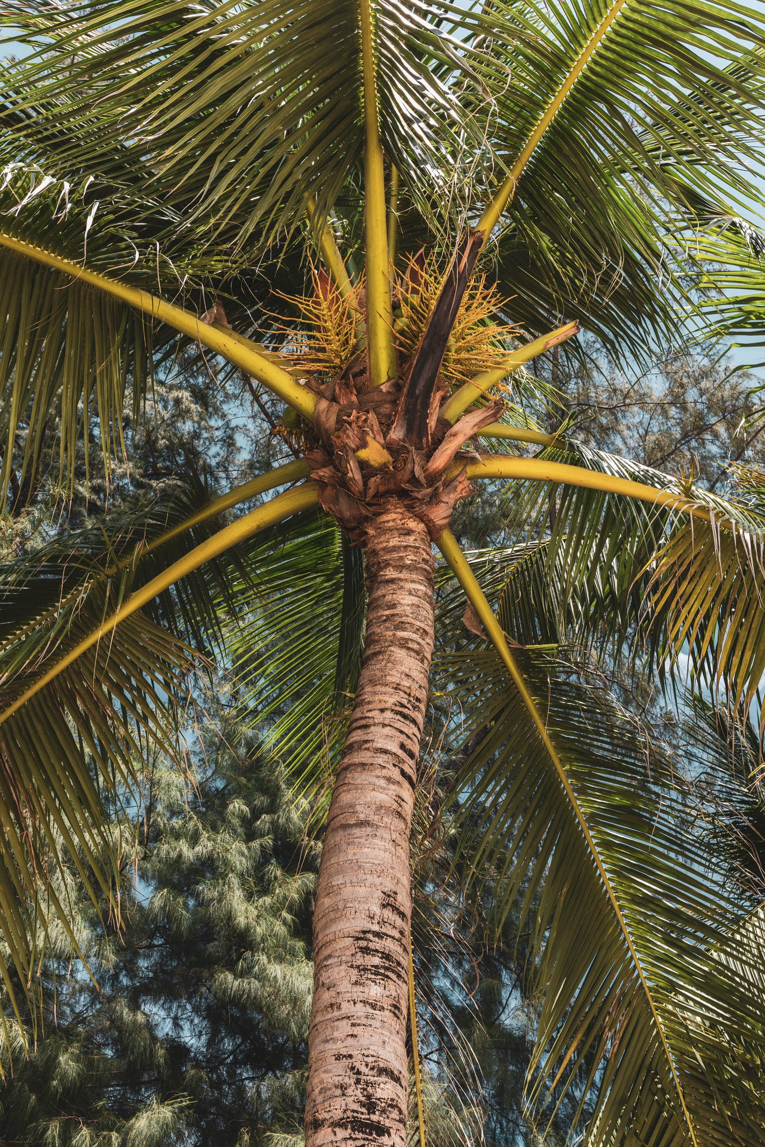 abstract photo, coconut tree, natural