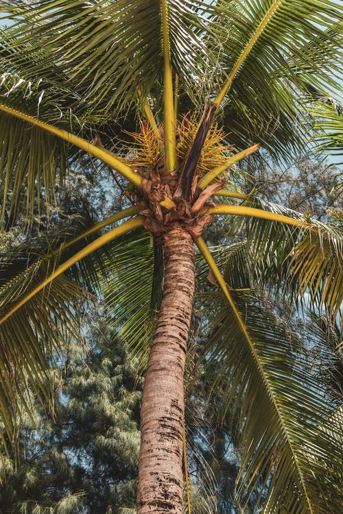 doğal, Hindistan cevizi ağacı, soyut fotoğraf içeren Ücretsiz stok fotoğraf