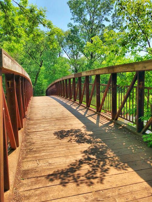 Základová fotografie zdarma na téma dřevěný most, les, modrá obloha, most