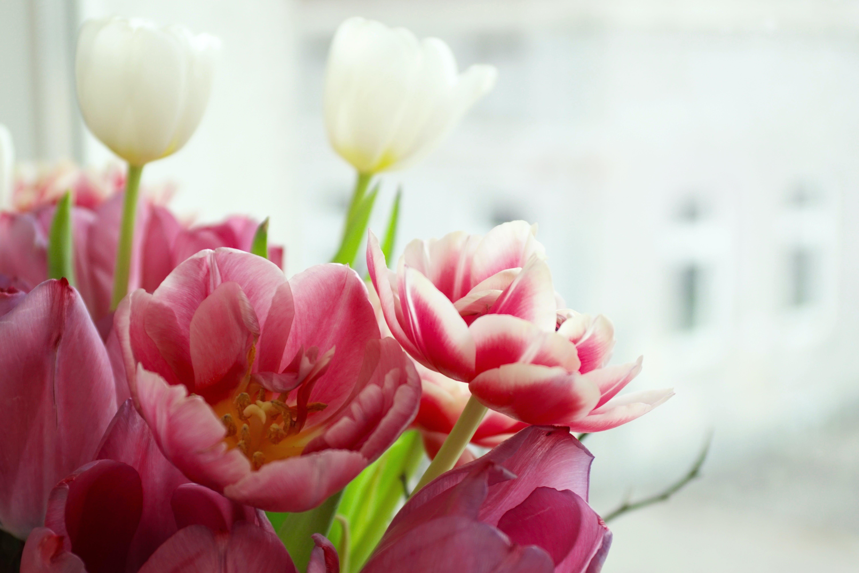 Photos gratuites de amour, arrière-plan, blanc, bouquet
