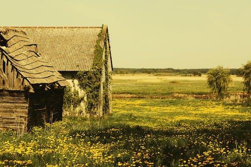 Foto profissional grátis de aldeia