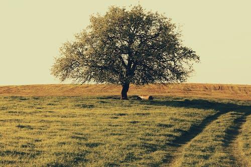 Foto profissional grátis de #árvore, paisagem