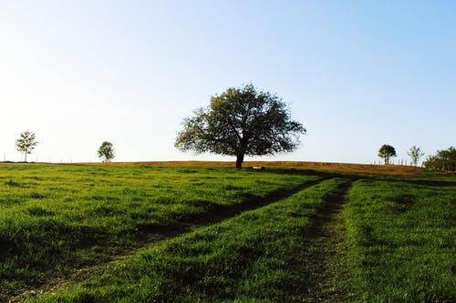 Foto profissional grátis de paisagem