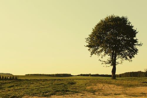 Foto profissional grátis de árvore