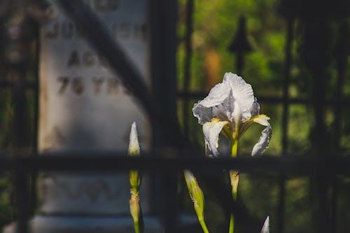 Бесплатное стоковое фото с красивый, легкий, надгробная плита, природа