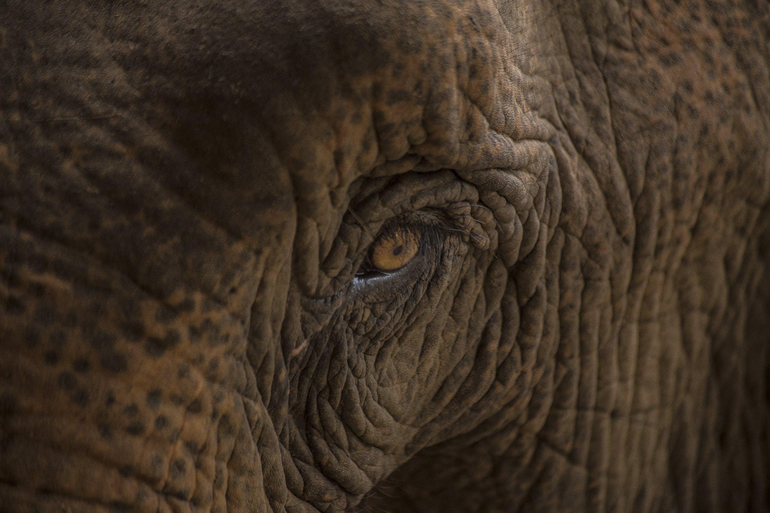 Základová fotografie zdarma na téma Afrika, bestie, divoký, kmen