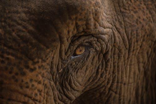哺乳動物, 壯觀, 大, 大規模的 的 免費圖庫相片