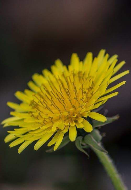 Ilmainen kuvapankkikuva tunnisteilla kasvi, Kauneus, keltainen, kukka