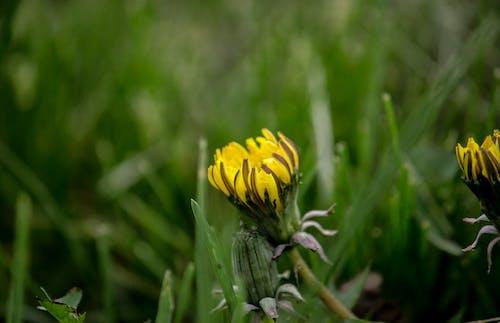 宏觀, 特寫, 綻放, 花 的 免費圖庫相片