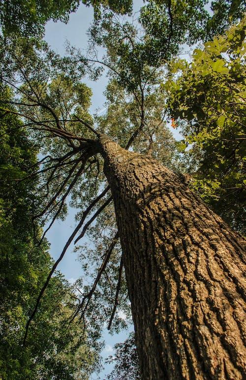 分公司, 寬, 根, 樹 的 免費圖庫相片