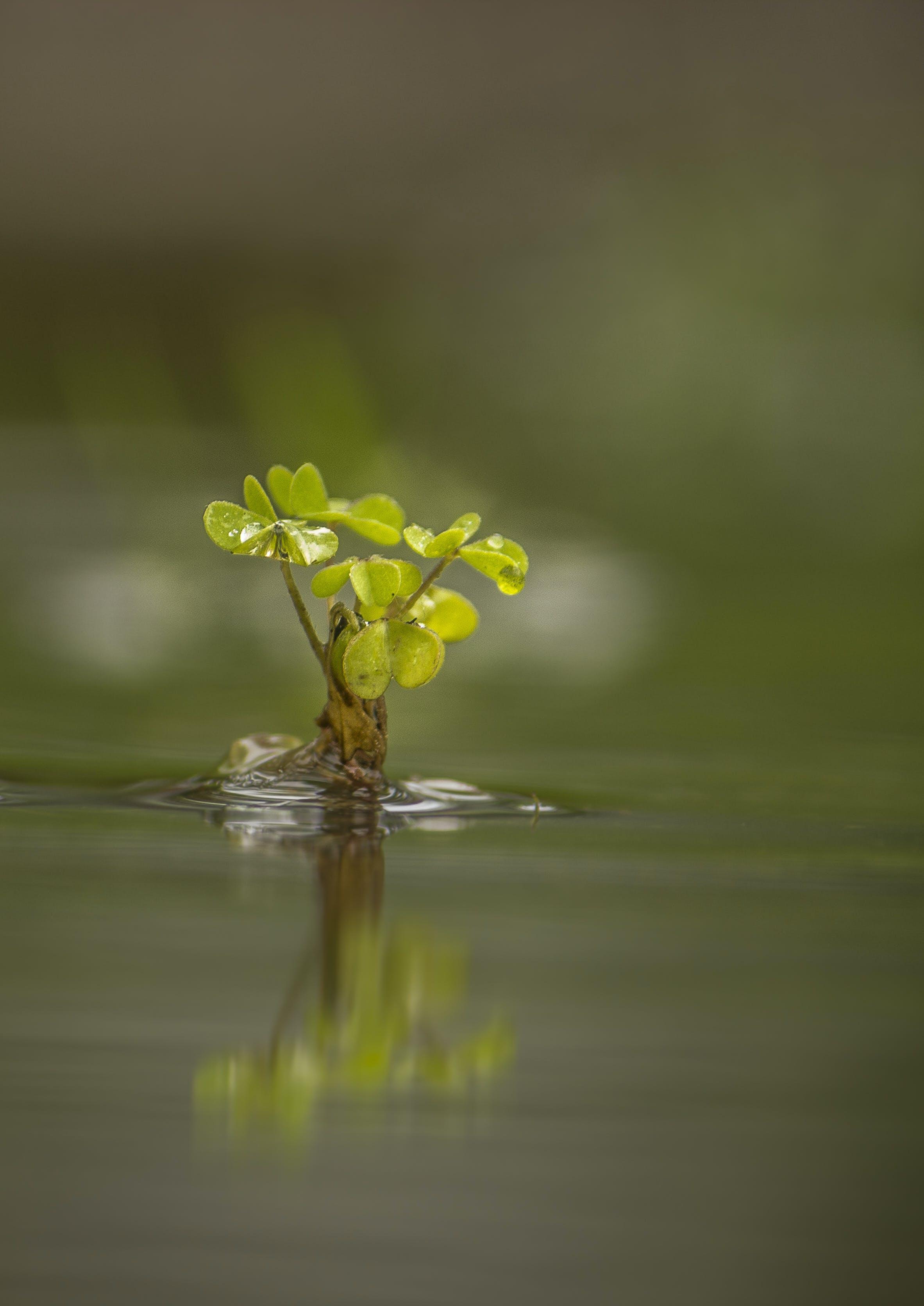 Základová fotografie zdarma na téma déšť, dešťové srážky, hurikán, makro