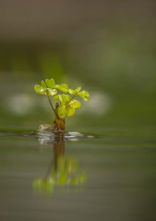 宏觀, 小, 後, 水 的 免費圖庫相片