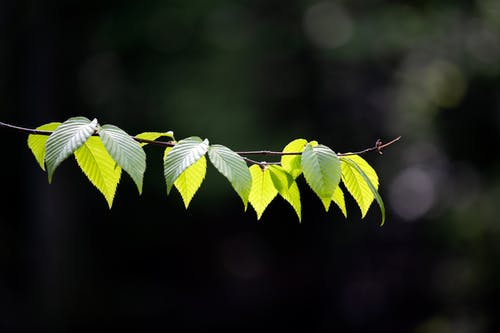 Selective Focus Photography of Green Leaves