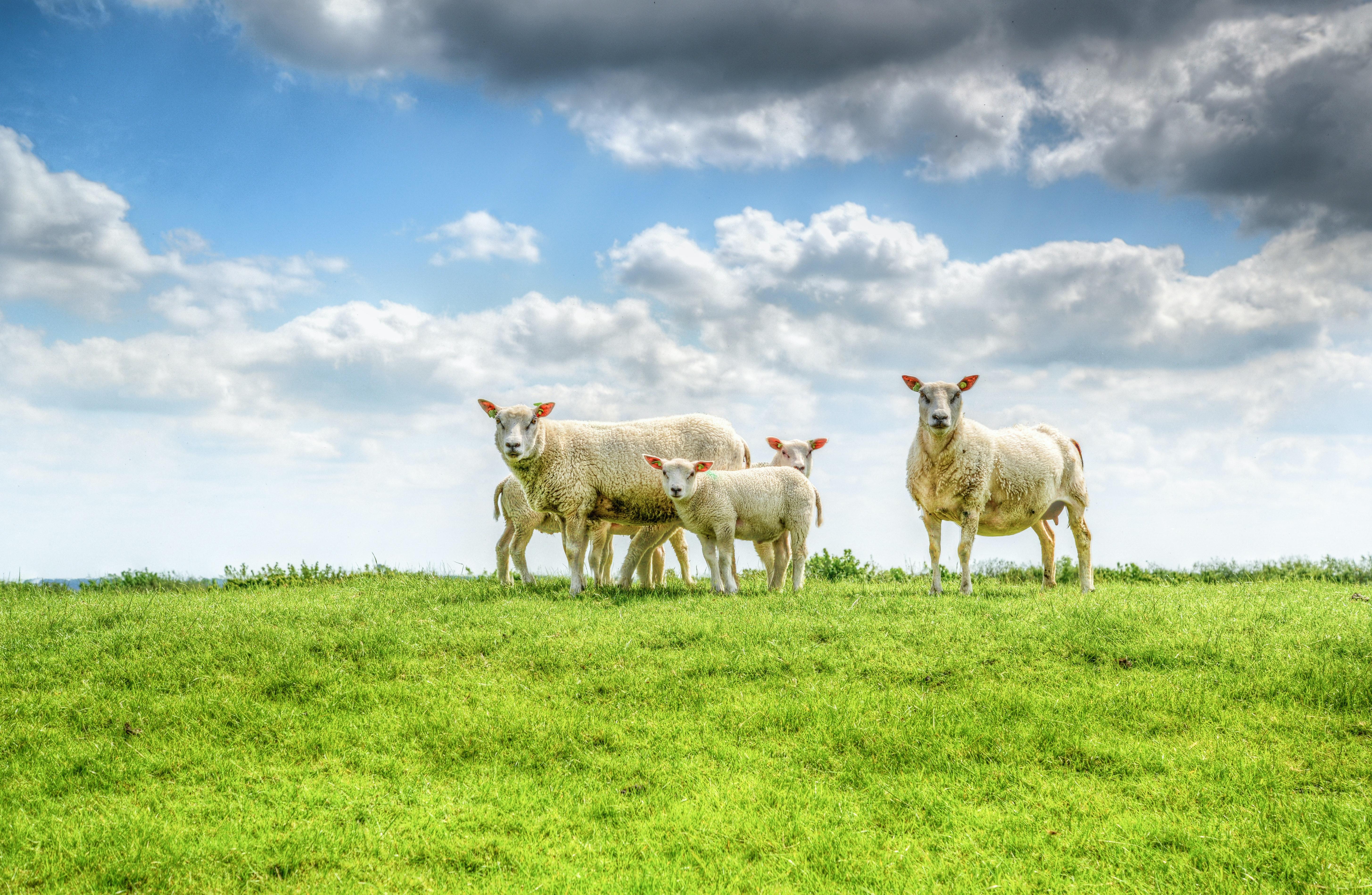 Free Stock Photo Of Animal Countryside Farm