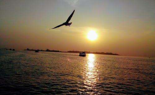 Fotos de stock gratuitas de Gaviota, mar arabe