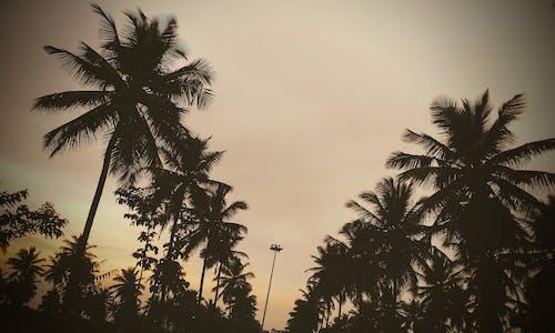 Fotos de stock gratuitas de calzada, Cocoteros, puesta de sol
