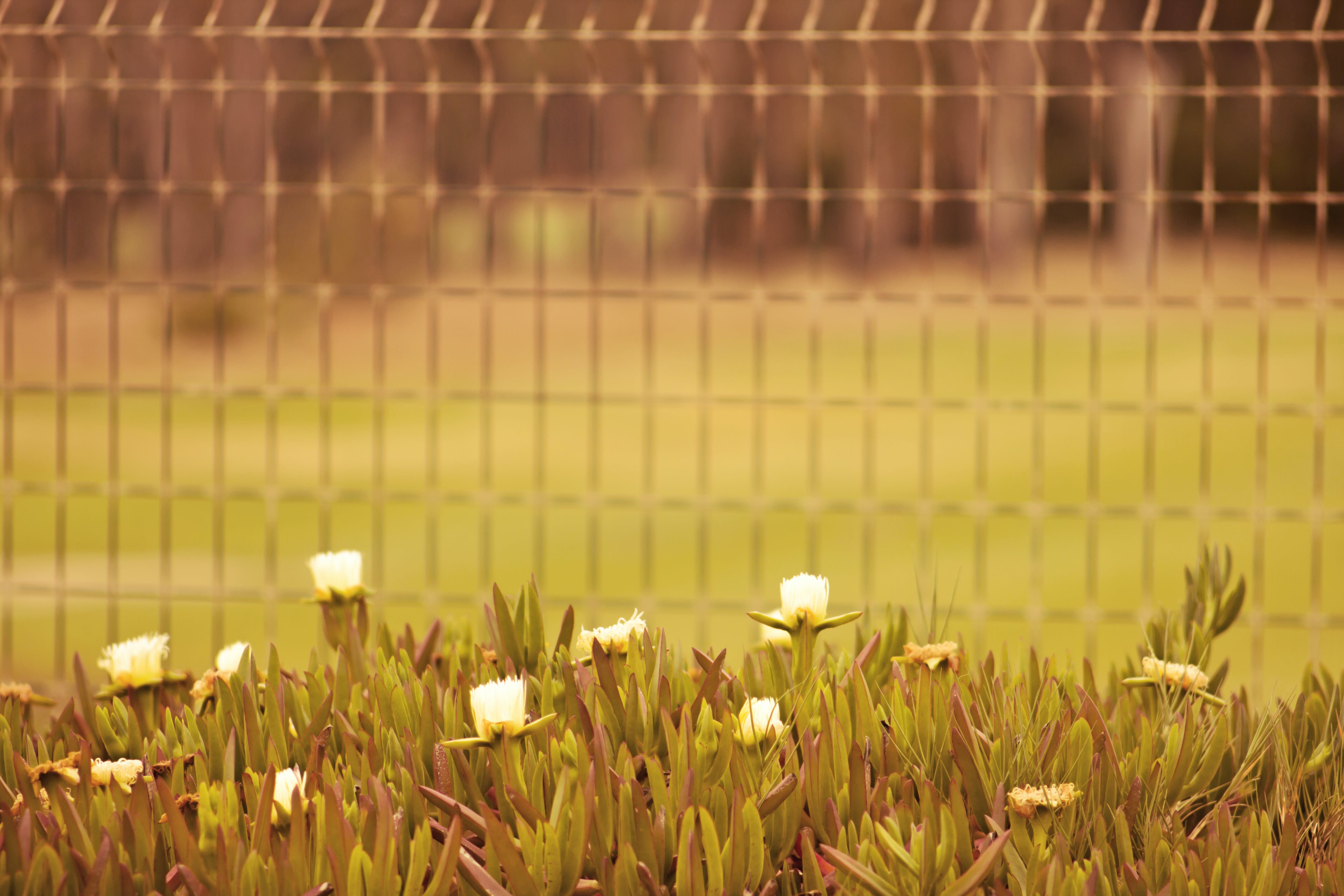 Selective Focus Photo of White Flowers Near Fence
