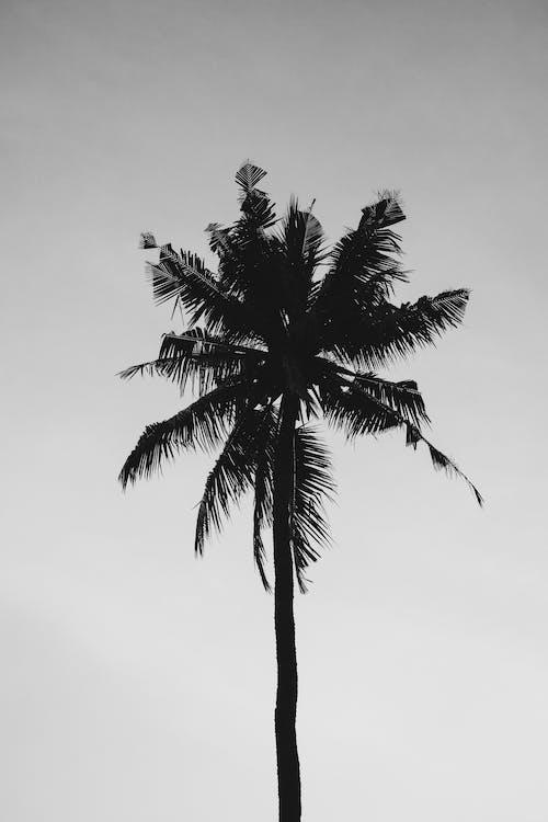 alb-negru, arbore, cer