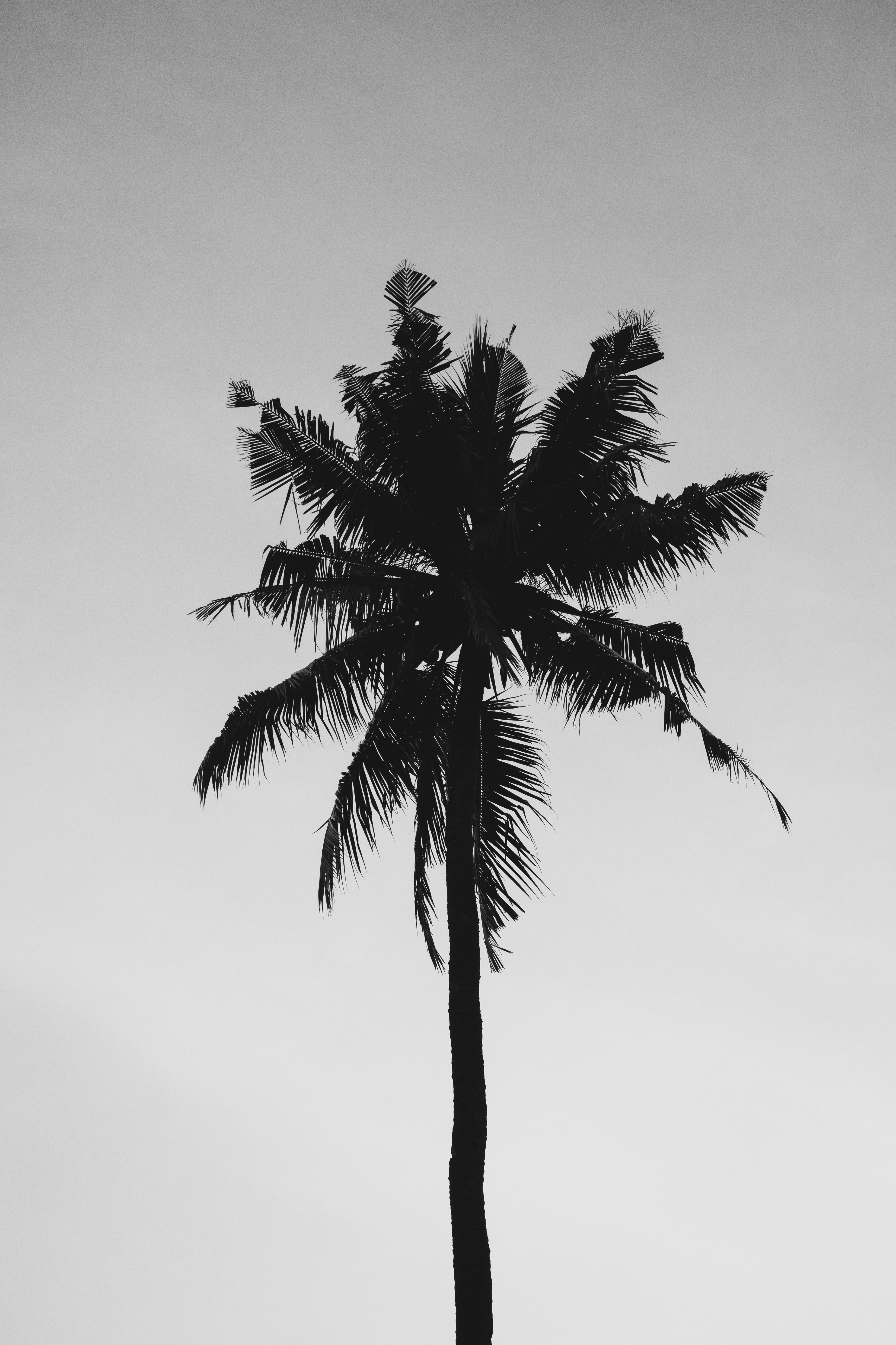 1000 amazing palm tree photos pexels free stock photos