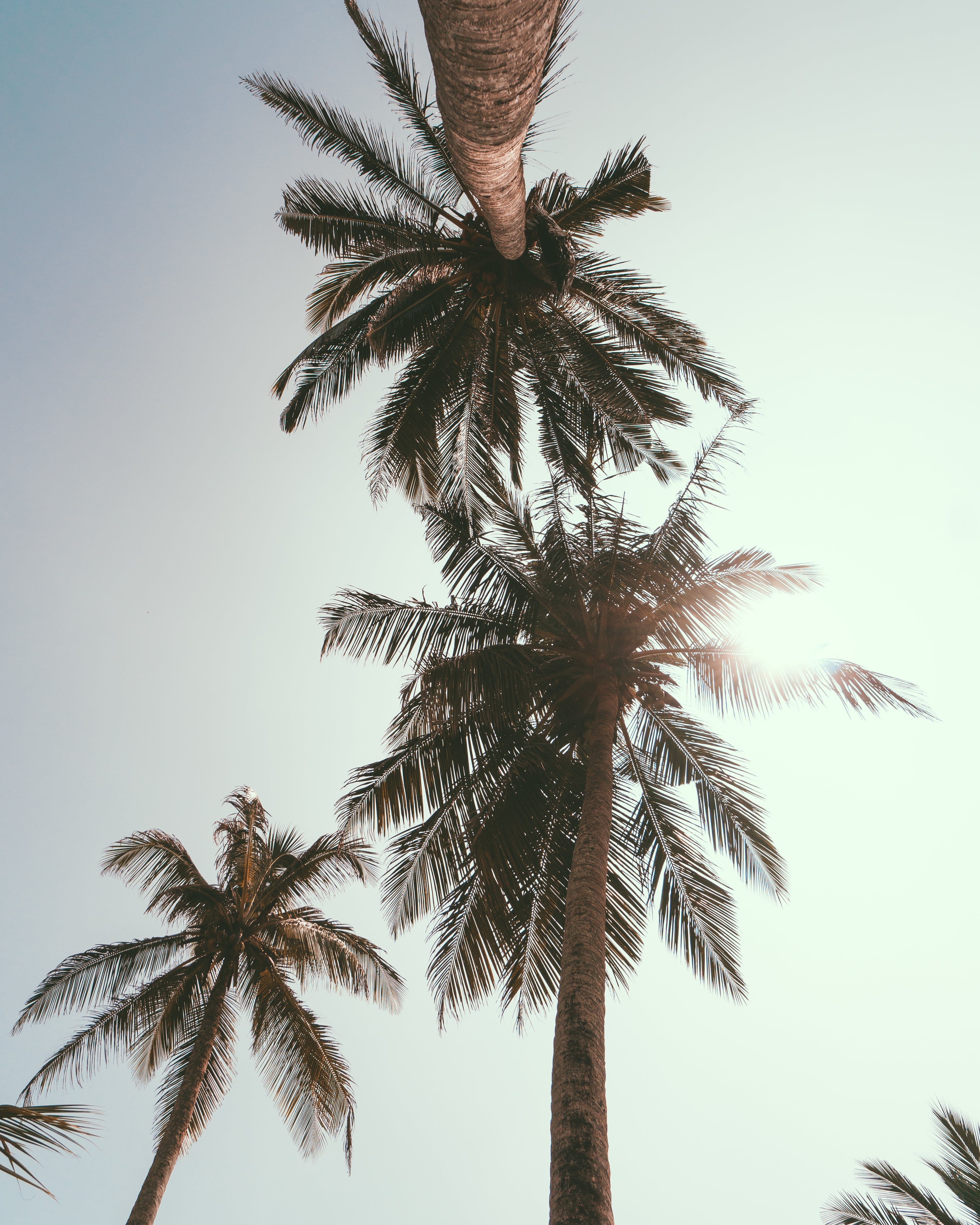 Low Angle Photography of Coconut Trees Under Blue Sky