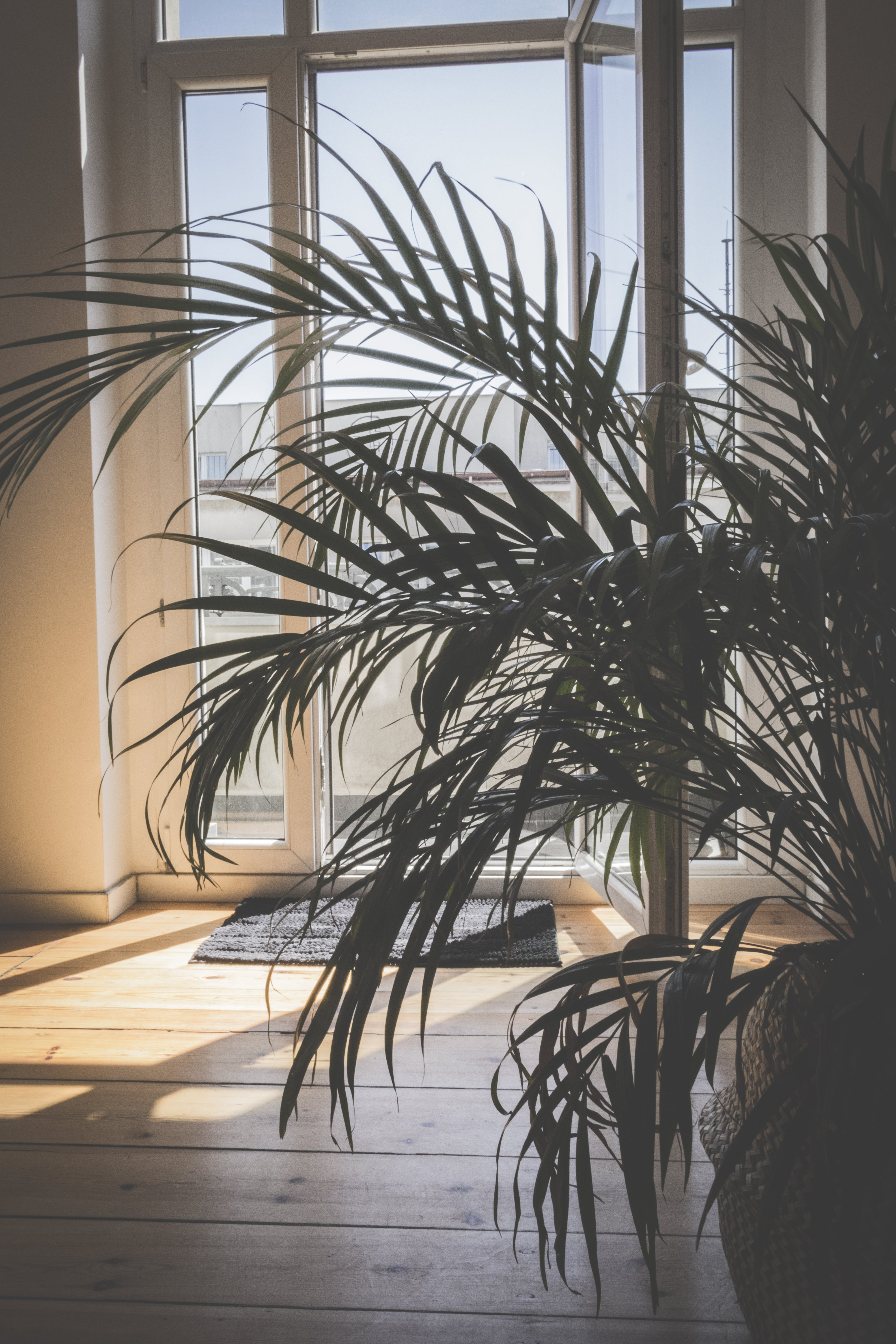 Green Palm Plant Inside Room