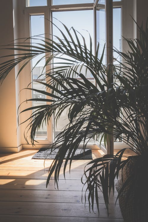 Green Palm Plant Inside Room
