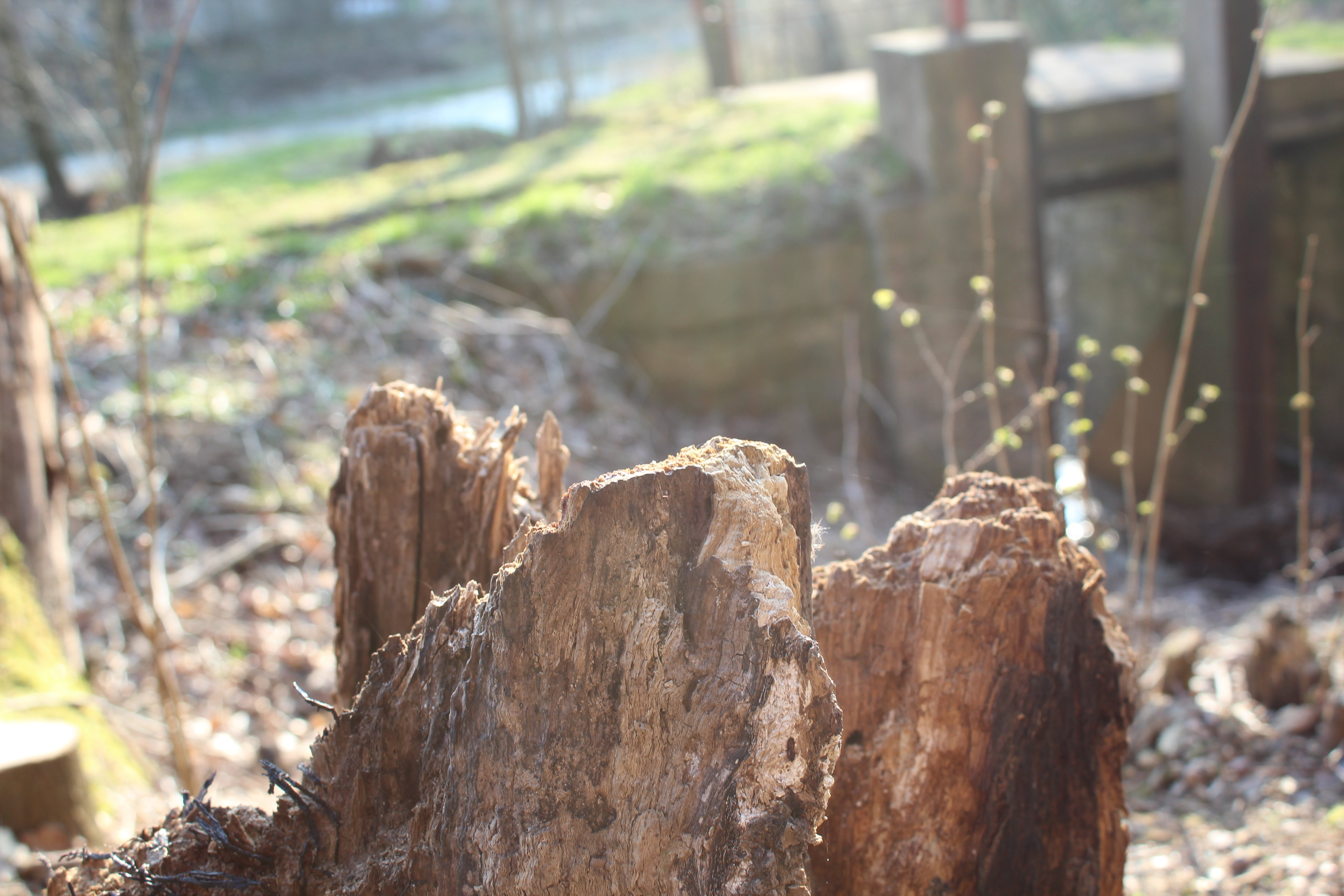 dřevo, příroda, příroda tapeta