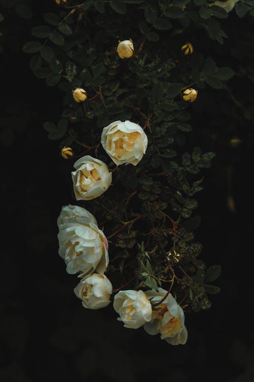 Darmowe zdjęcie z galerii z białoruś, ciemność, ciemnozielony, drzewo