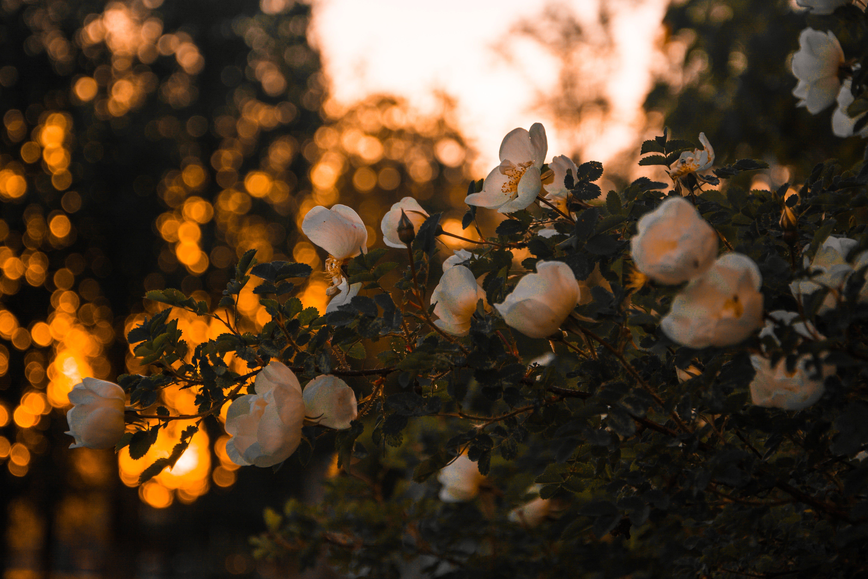 Gratis lagerfoto af blomstrende, farve, farverig, flora