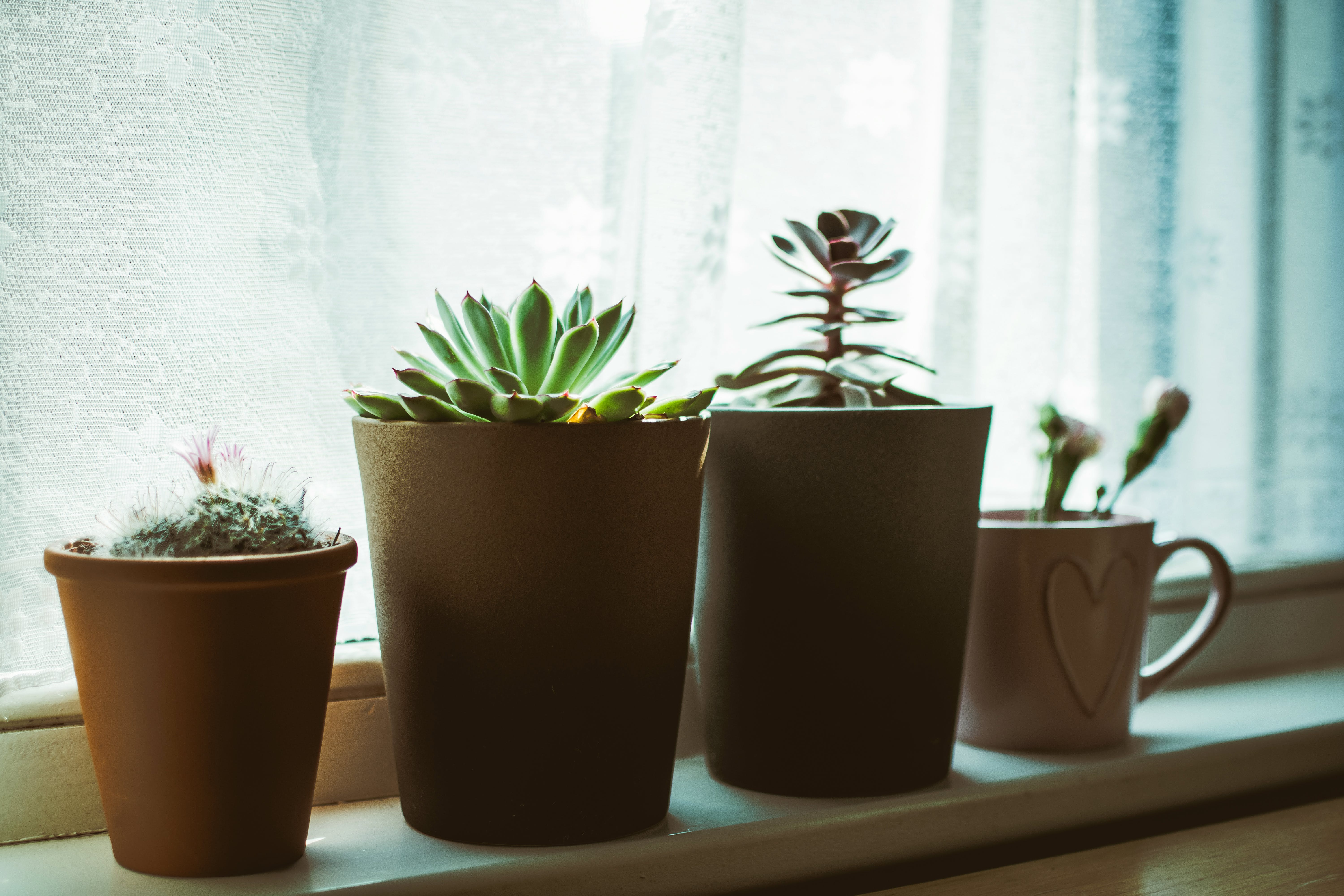 Four Assorted-color Plants on Pots Near Window