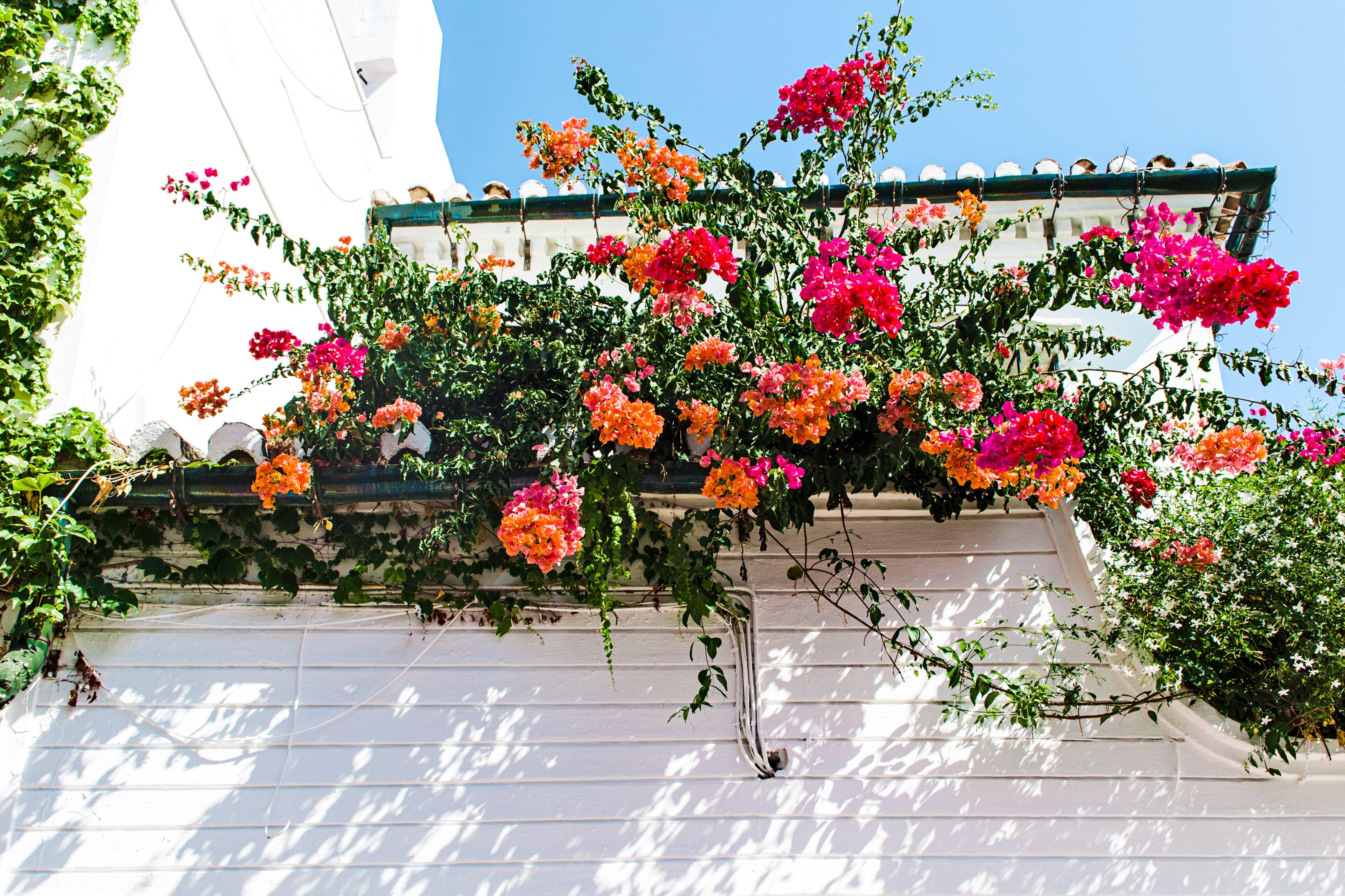 Red and Orange Petal Flowers