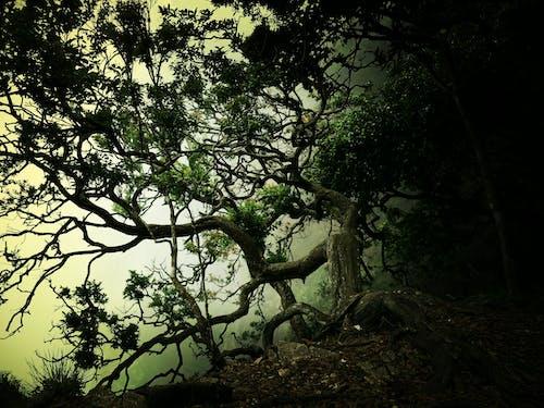 Základová fotografie zdarma na téma temný les
