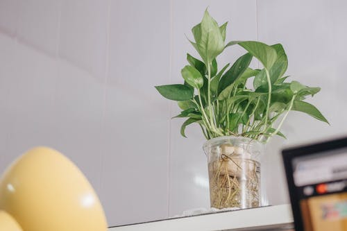 Photo of Green Plants in Clear Vase