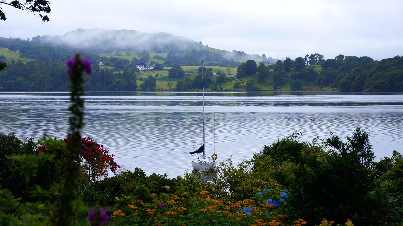 Foto stok gratis air, alam, bunga-bunga, lansekap