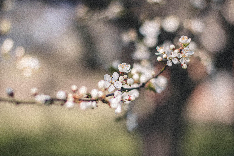 Closeup Photography of White Petal Flower