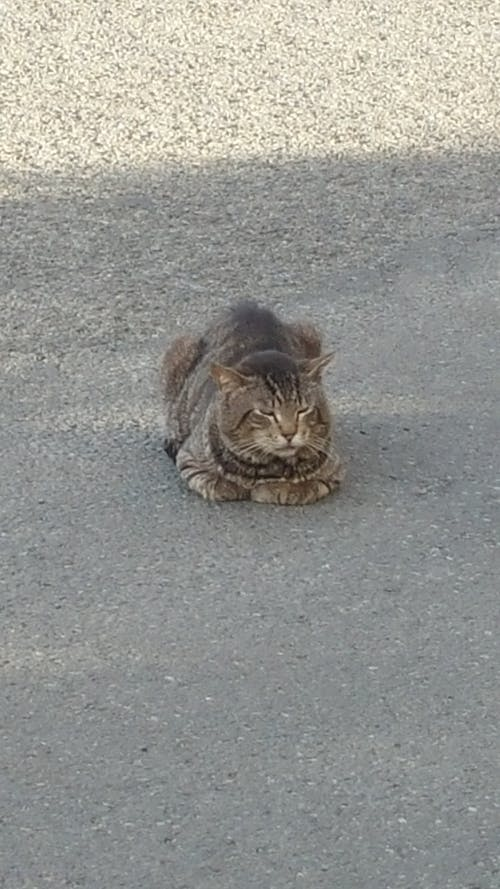Безкоштовне стокове фото на тему «кішка»