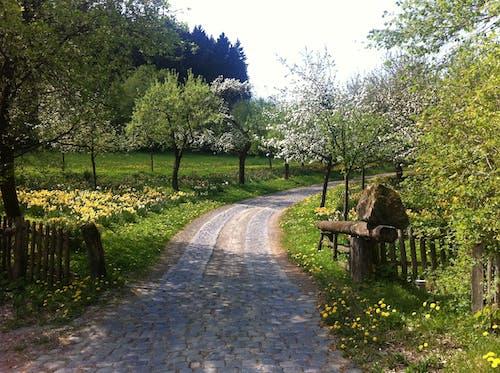 Free stock photo of footpath, path, springtime