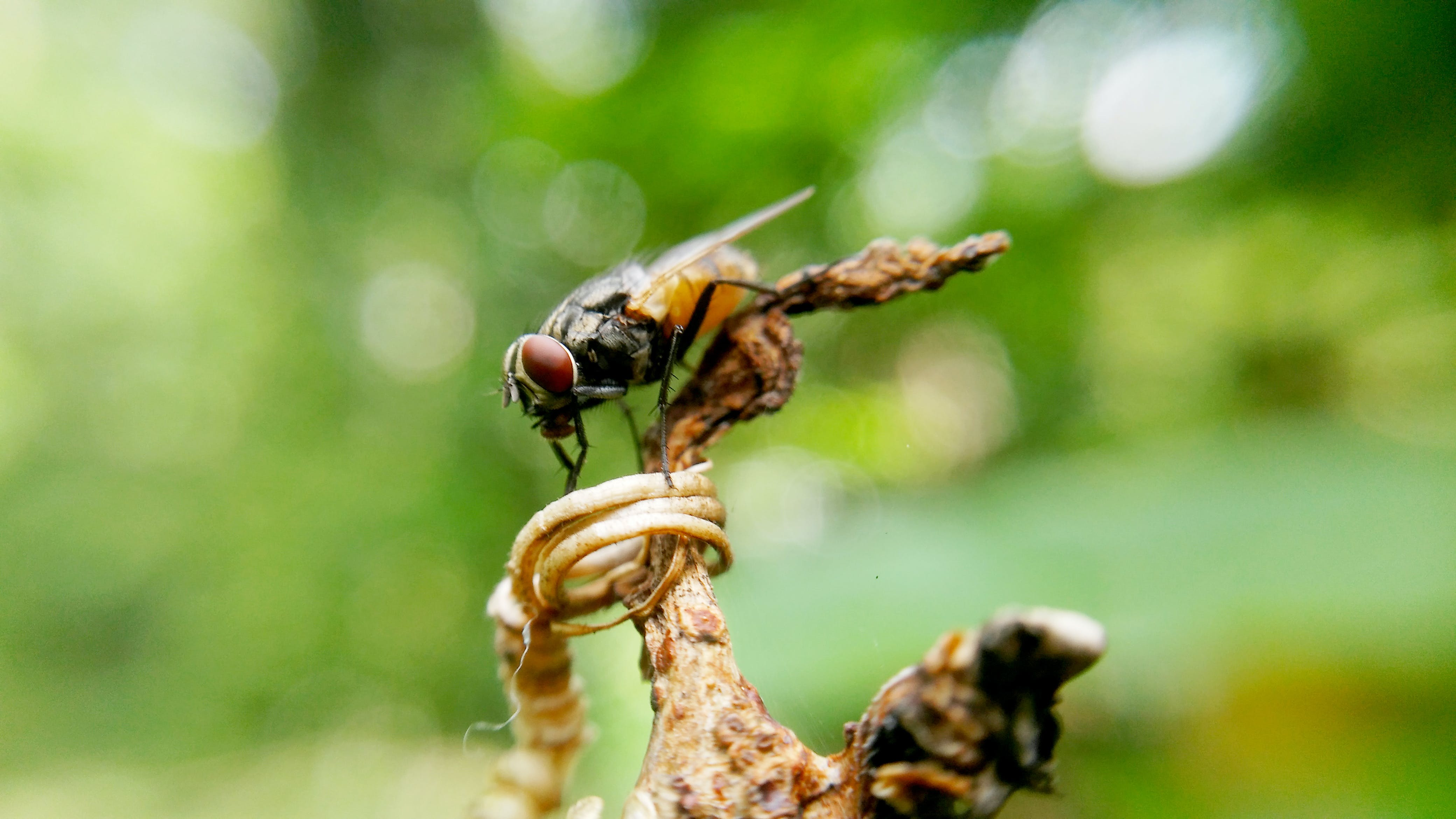 คลังภาพถ่ายฟรี ของ แมลง, แมโคร, โคลสอัป