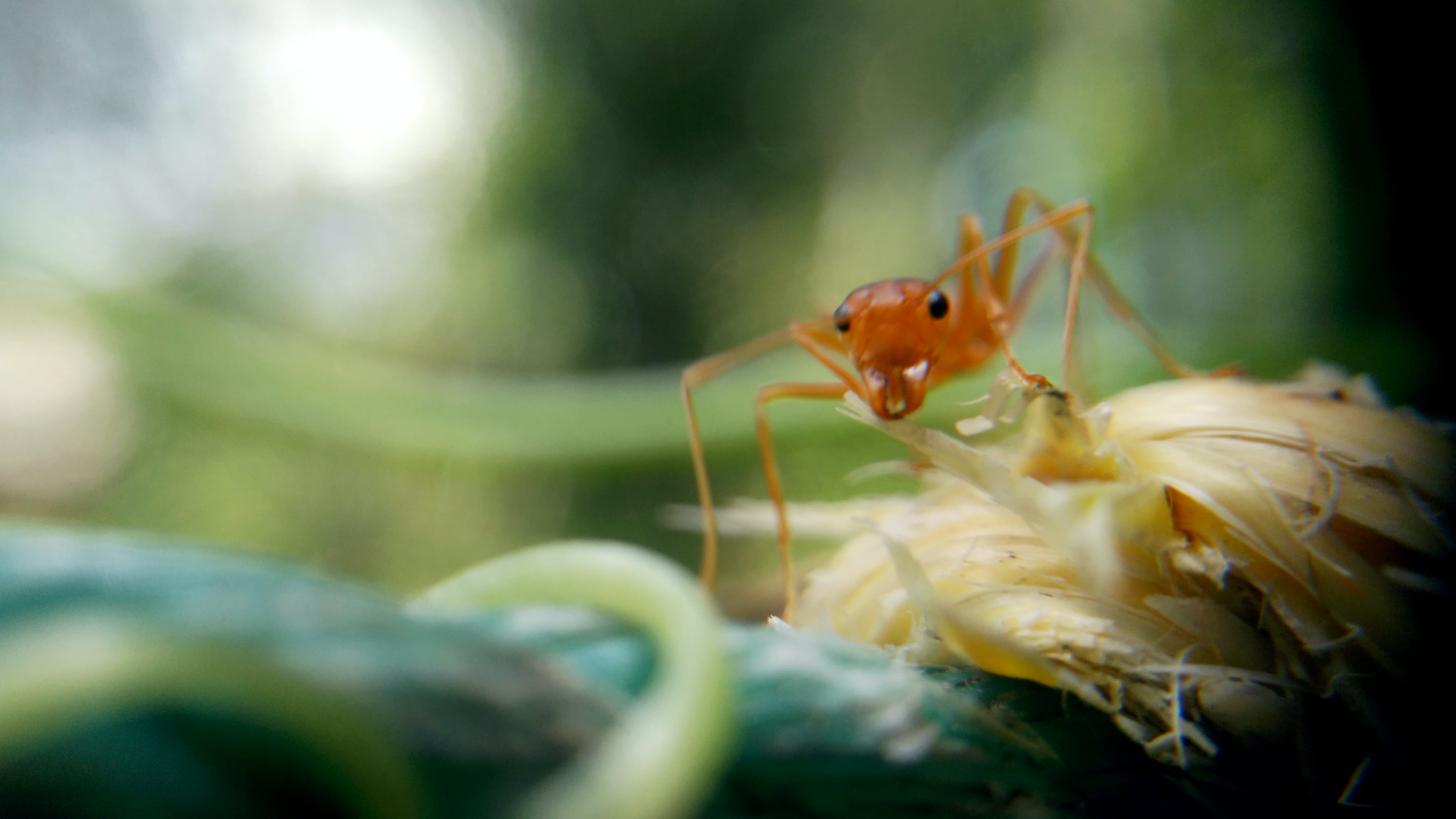 Free stock photo of ant, macro, macro photography