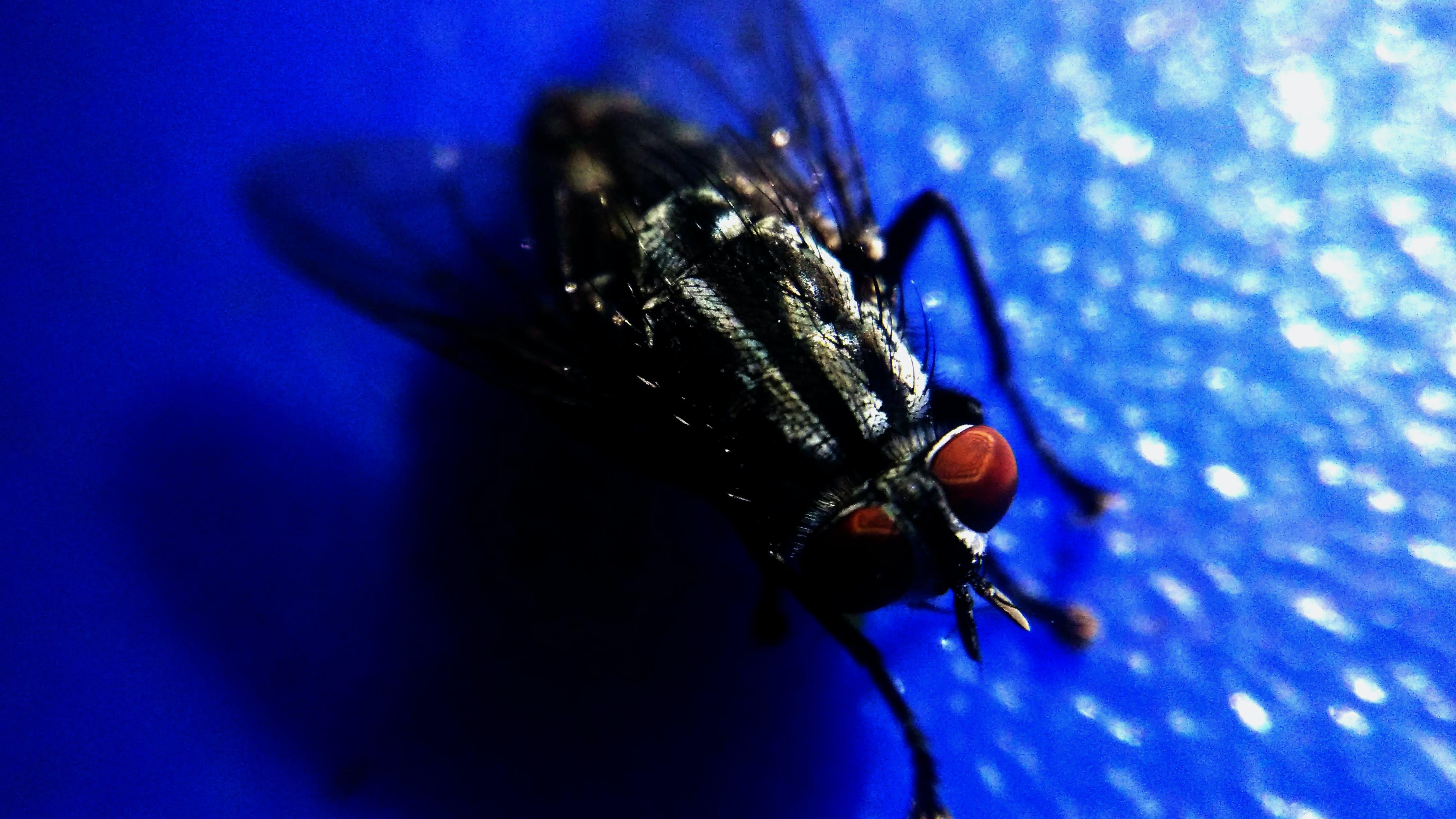 Free stock photo of fly, macro, macro photography