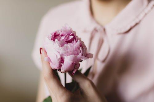 Ingyenes stockfotó kéz, nő, növényvilág, pünkösdi rózsa témában
