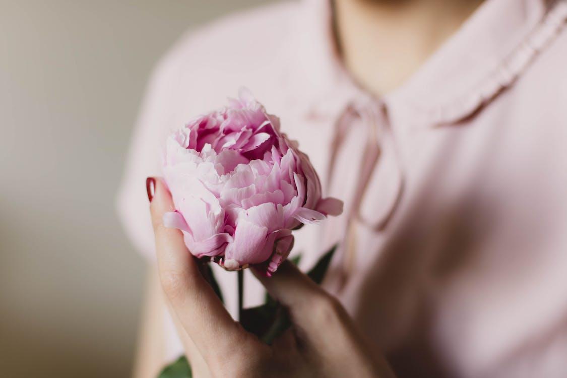 Flor De Pétala Rosa