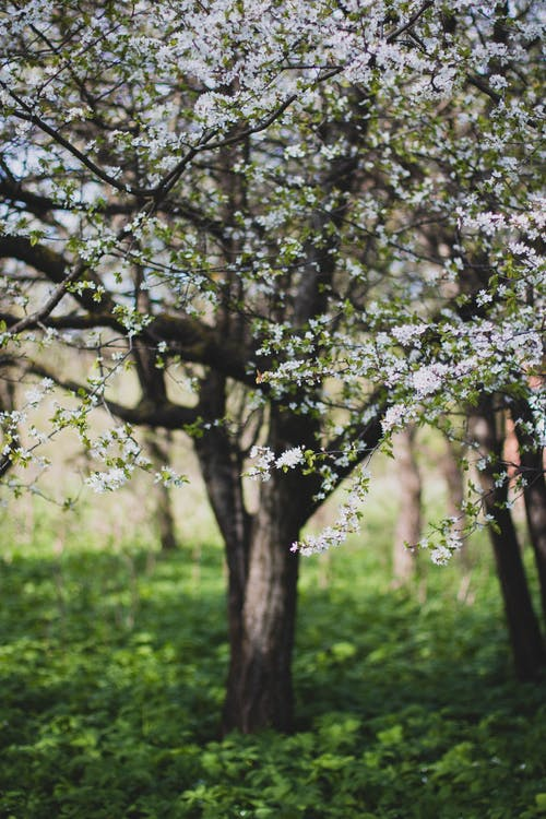 Green and White Petaled Flower Trees