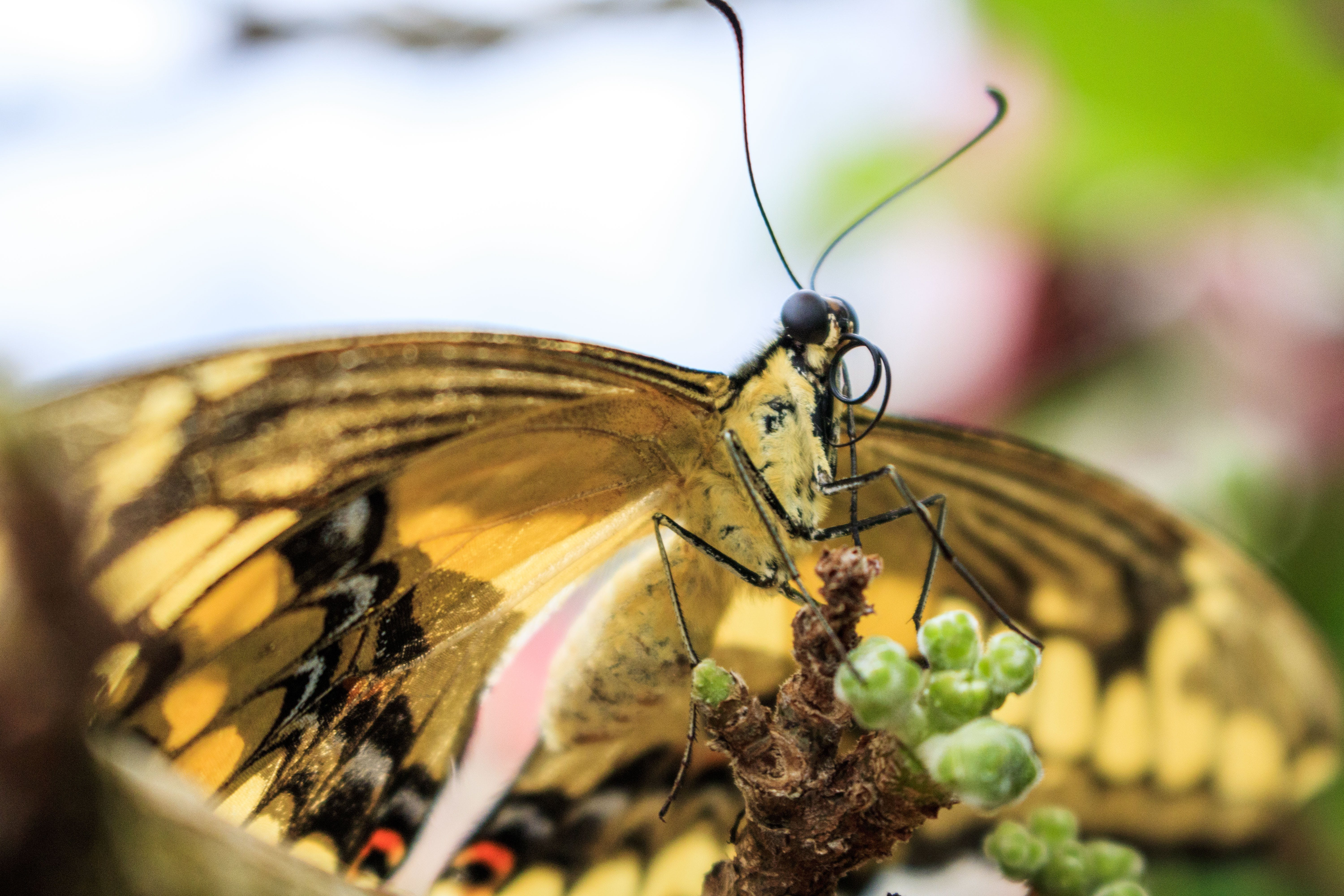 Closeup Photo of Yellow Butterfly
