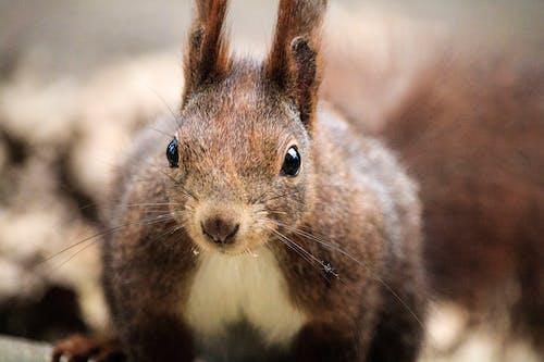 Foto profissional grátis de adorável, animais selvagens, animal, ao ar livre