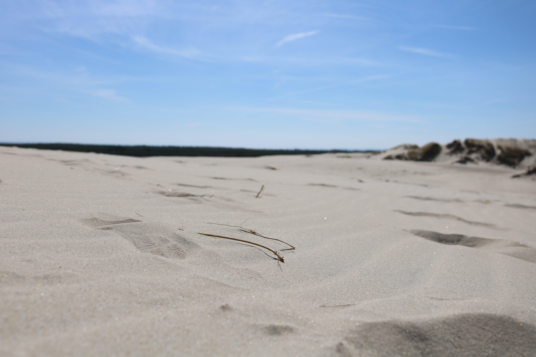 Free stock photo of beach, desert, sand