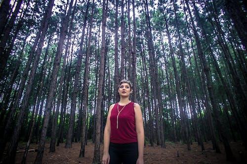 Бесплатное стоковое фото с активный отдых, ботанический, девочка, дерево