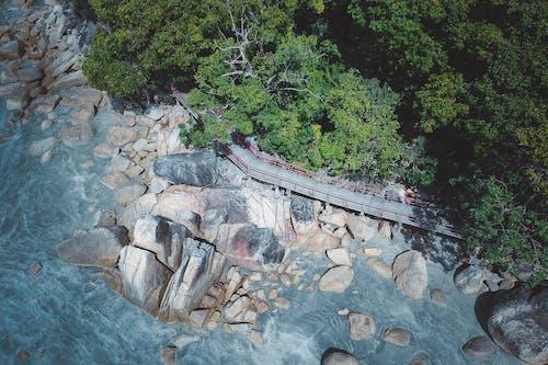 Gratis stockfoto met bomen, h2o, hout, landschap