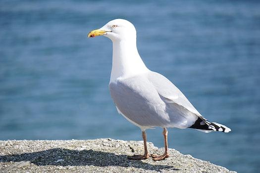 Free stock photo of bird, animal, seagull, gull