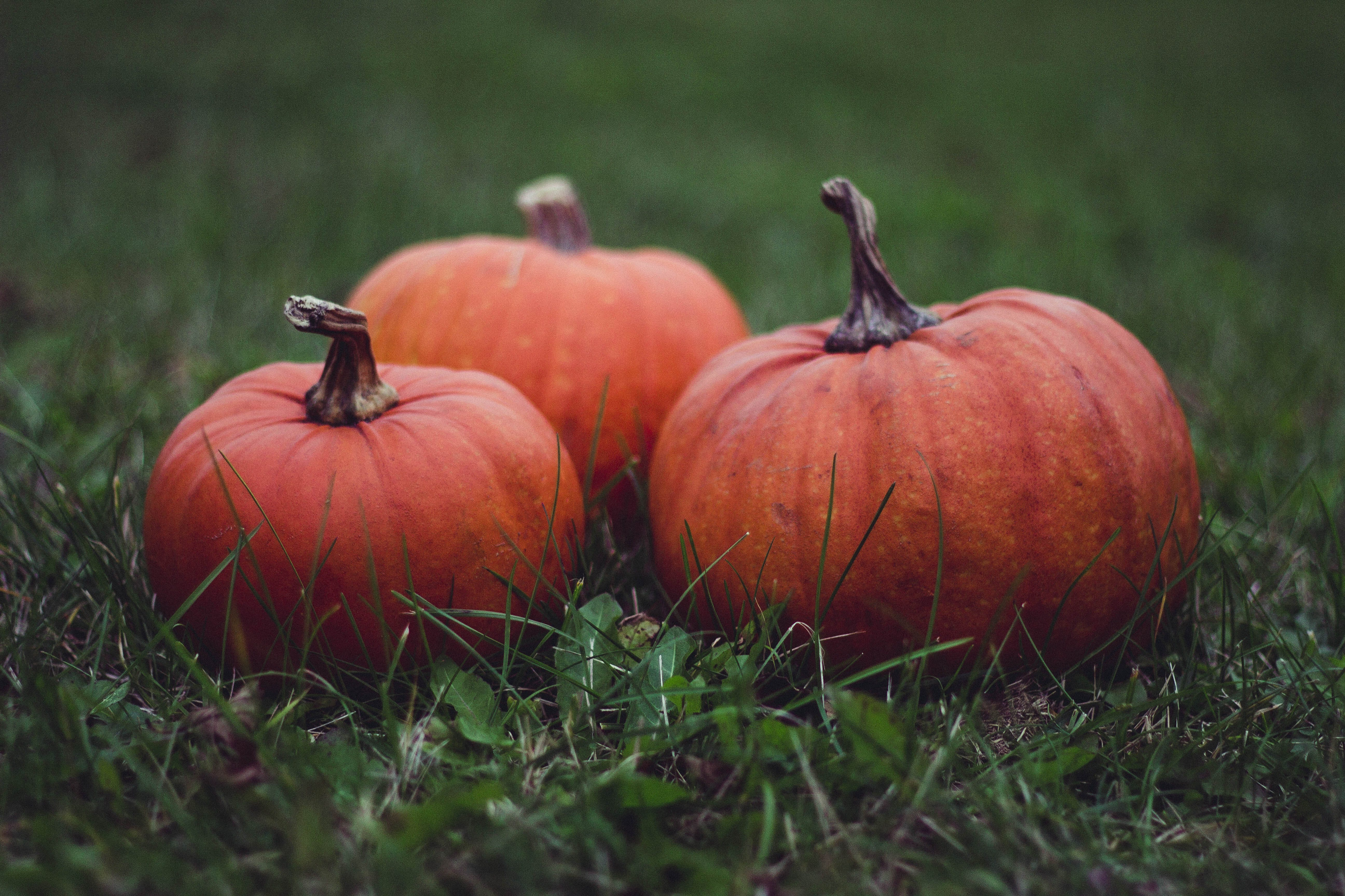 Three Pumpkins in Grass